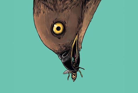 Komic Librería: El regreso del halcón abejero